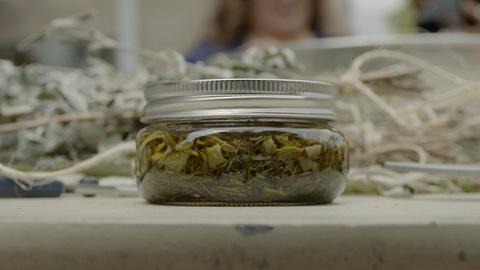 Tending Nature -- The Making of Traditional Plant Medicine