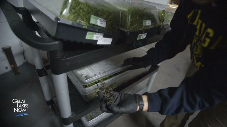 Great Lakes Now: Hydroponics: Growing for the Great Lakes