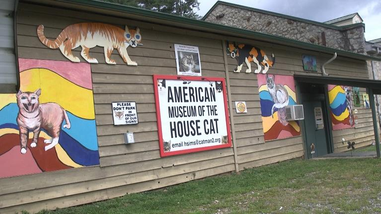 NC Weekend: The American Museum of the House Cat