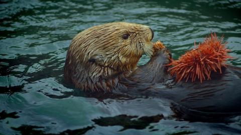 S38 E2: Otters & Orcas: An Alaskan Mystery