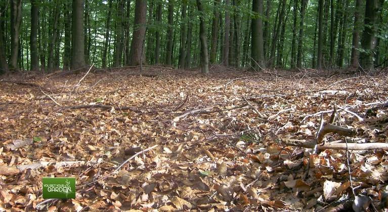 You Bet Your Garden: Ethics of Fallen Leaves
