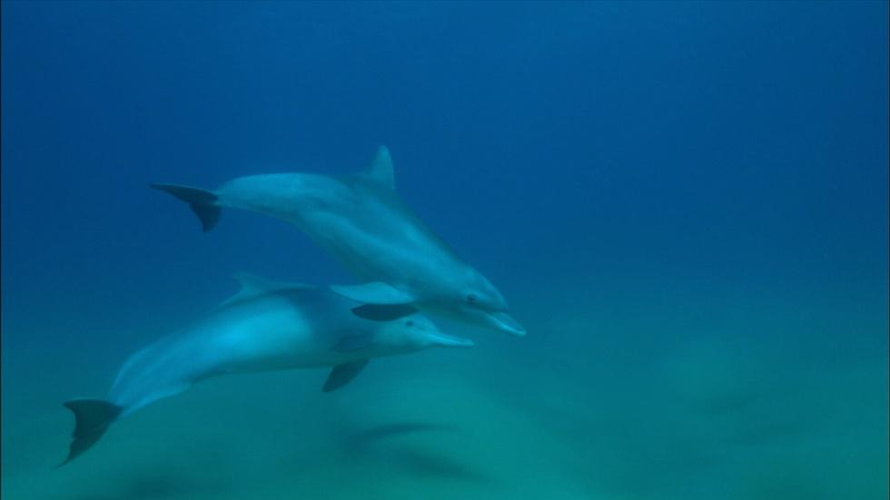 Bottlenose and Humpback Dolphins Become Friends image