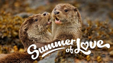 Nature -- NATURE's Summer of Love!