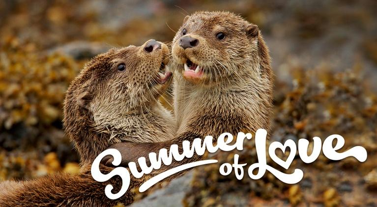 Nature: NATURE's Summer of Love!