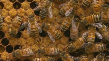 Keep Calm and... Tend to 20,000 Bees   Backyard Nature