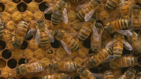 Keep Calm and... Tend to 20,000 Bees | Backyard Nature