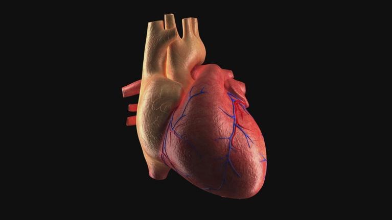 Science Trek: The Heart: Heart Basics