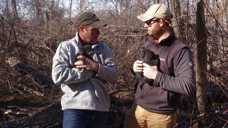 Kentucky Afield: Fishing for Stripers; Brush Chaining; Black Bear Cubs