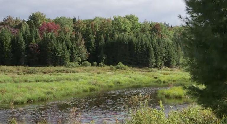 New York NOW: A Push for More Forest Rangers