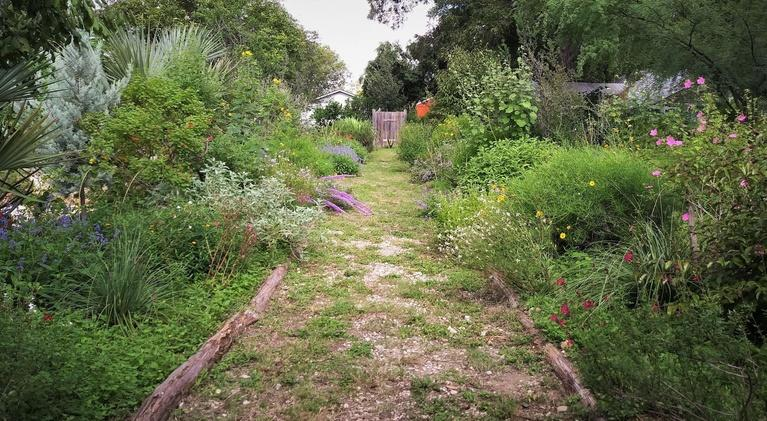 Central Texas Gardener: Take a Walk on the Dry Side Plants