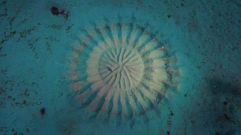 Big Pacific -- The Pufferfish