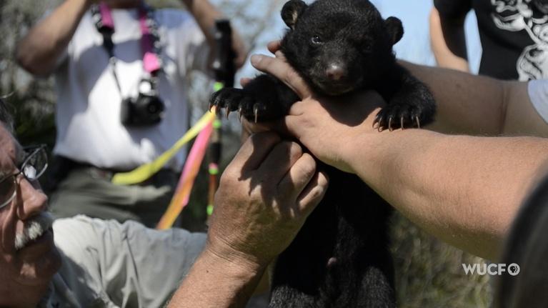 SCIENCE!: Black Bear Encounters
