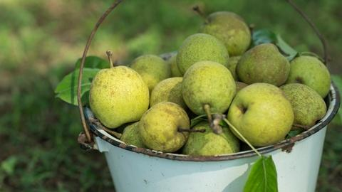 A Chef's Life -- The Pear Tree