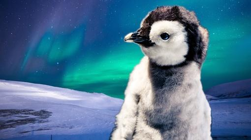 Animal IQ : Baby Penguins Can Navigate Better than You