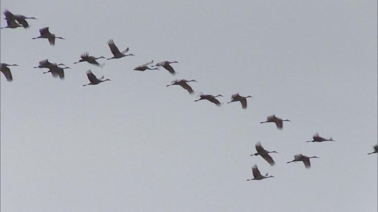 Kentucky Afield: Sandhill Crane Hunt; Tree Stand Safety Tips