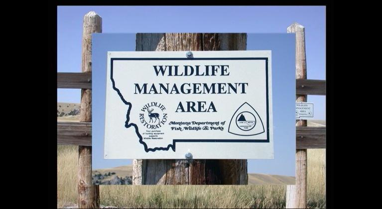 Back From The Brink: Montana's Wildlife Legacy Part 2: Back From The Brink: Montana's Wildlife Legacy Part 2