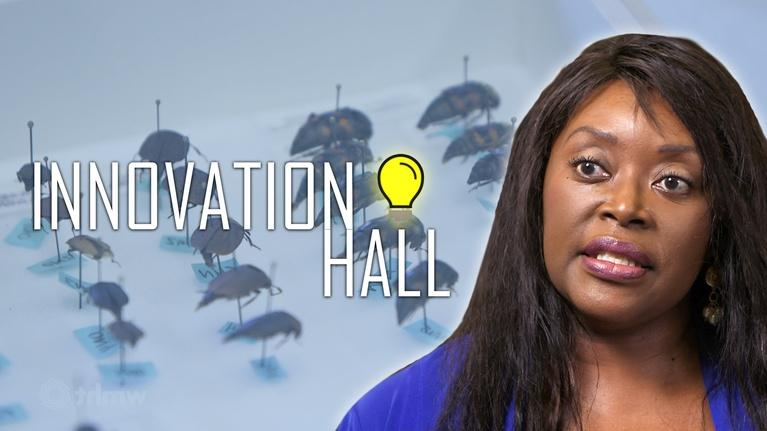 Innovation Hall: Crime-Solving Bugs