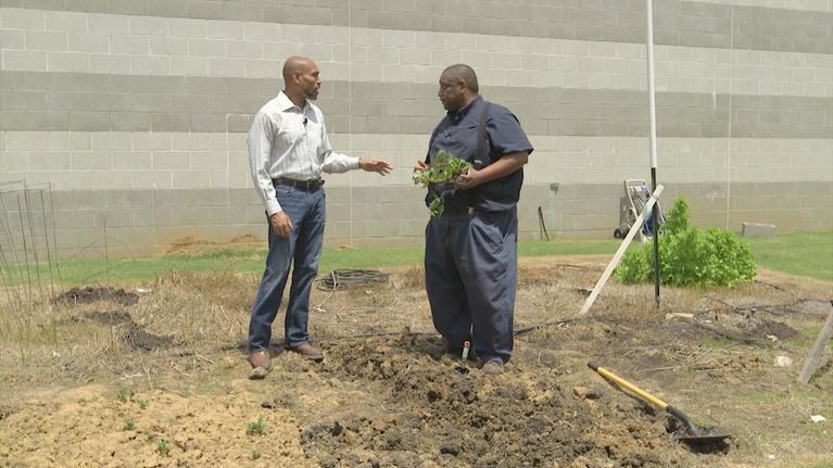 The Family Plot: Planting Sweet Potatoes & Ergonomic Gardening