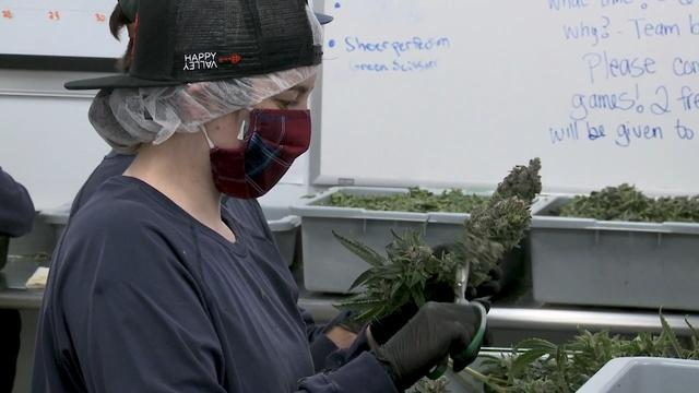 Minorities struggle for headway in the legal weed business