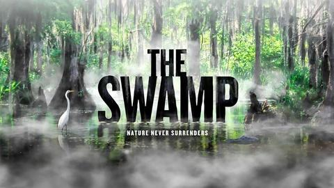 American Experience -- The Swamp
