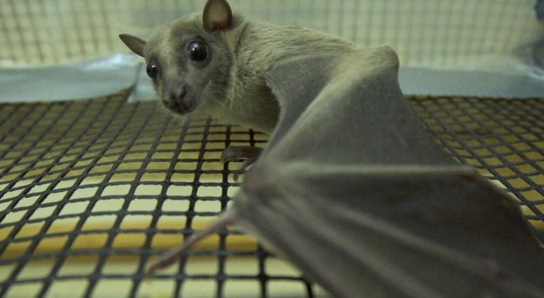 WCNY SciTech Now: Bats, Brains, and Mudslides!