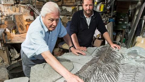 Nature -- Discovering a New Ichthyosaur