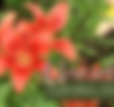 Unearthed: Garden Stories