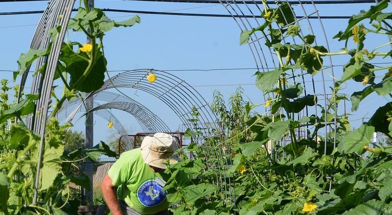 Central Texas Gardener: Evergreen Ideas for Sun & Shade