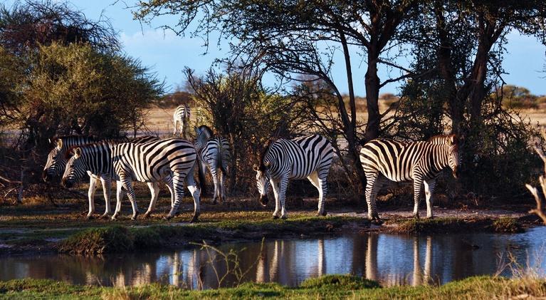 Nature's Great Race: Zebra