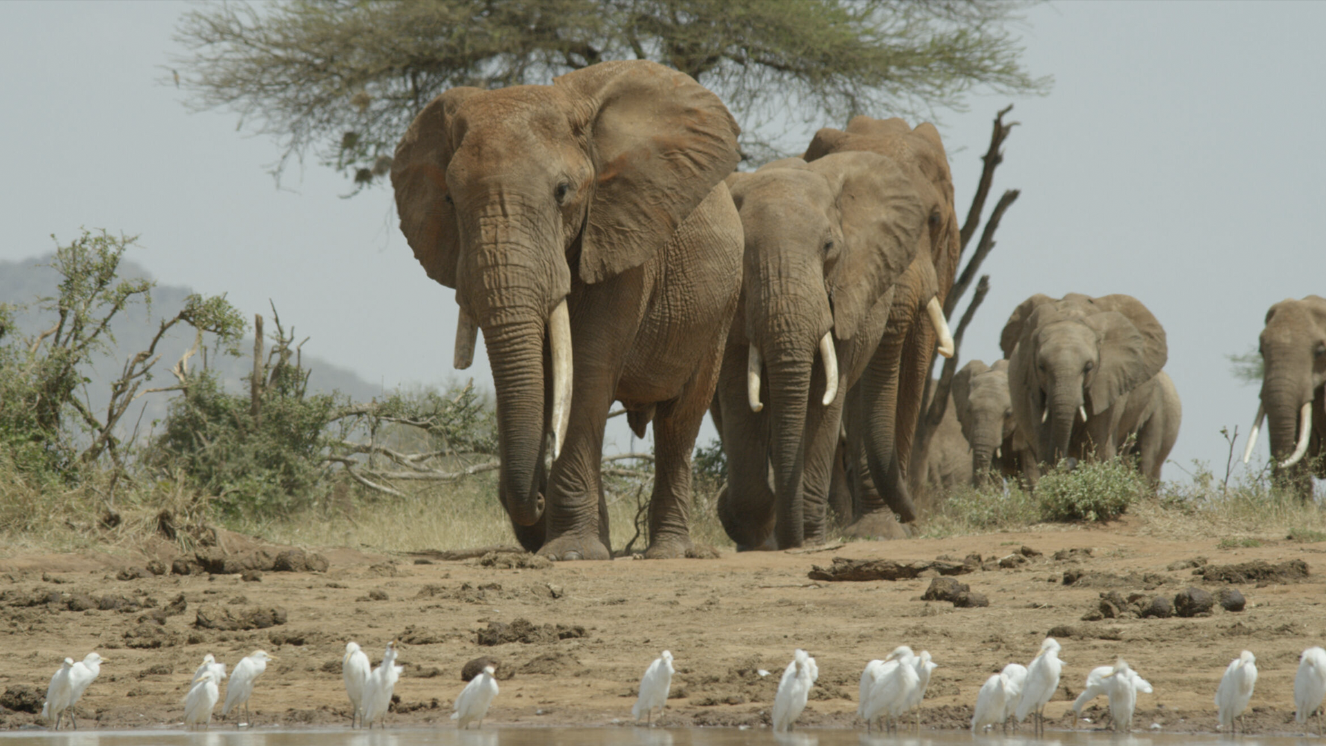 The Elephant and the Termite