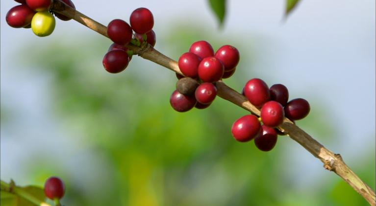 Coffee The Drink That Changed America: Coffee The Drink That Changed America