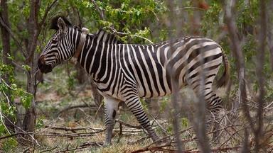 Meeting Winnie the Zebra