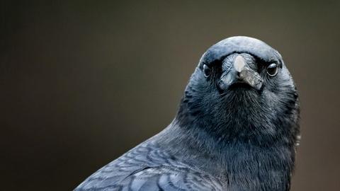 NOVA -- Bird Brain