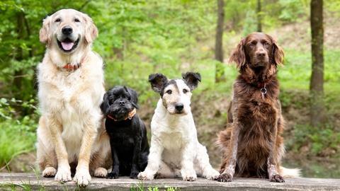 NOVA -- Dog Tales