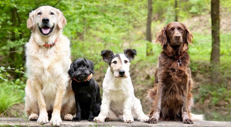 NOVA: Dog Tales