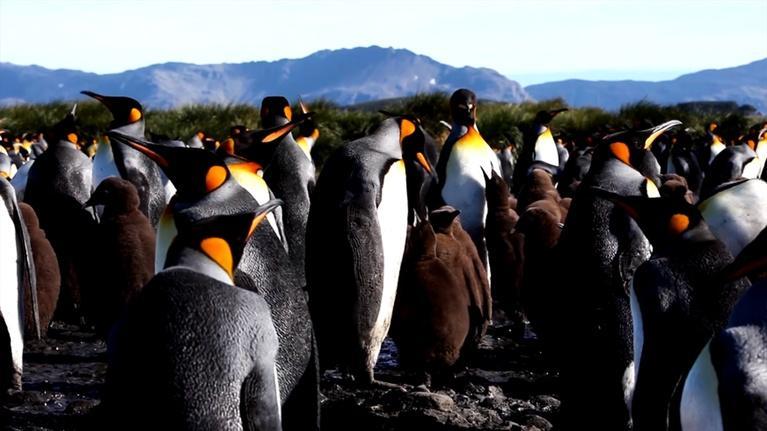 CET Community: Explore the Colonies: Fun Facts About Penguins