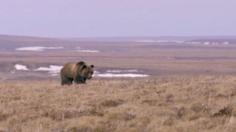 Nature's Great Race -- Bear Gets Too Close for Comfort
