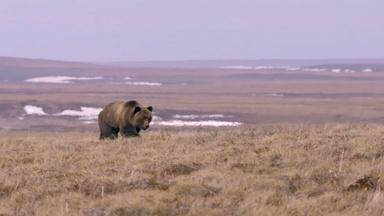 Bear Gets Too Close for Comfort