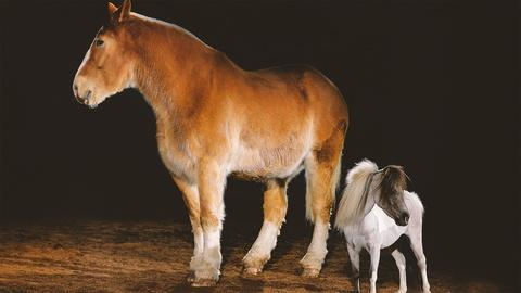 S37 E8: All the Pretty Horses