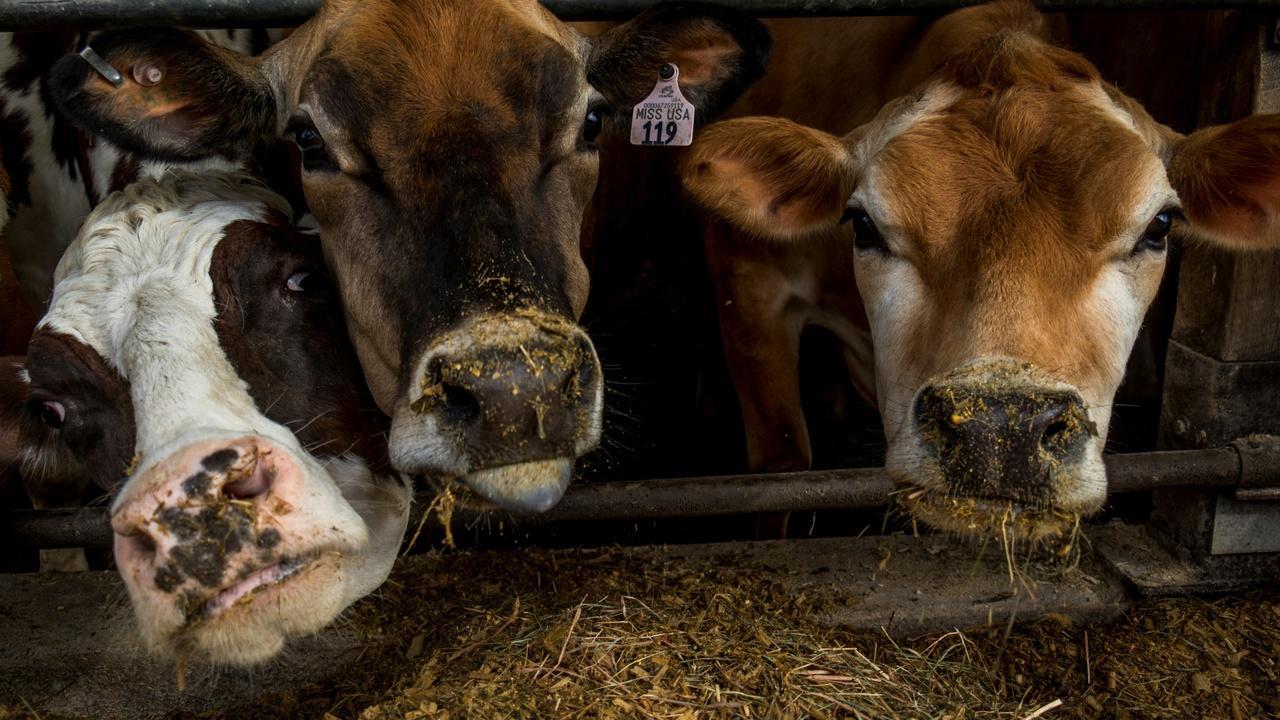 News Wrap: Senate passes farm bill after months-long stall