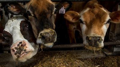 PBS NewsHour | News Wrap: Senate passes farm bill after months-long stall