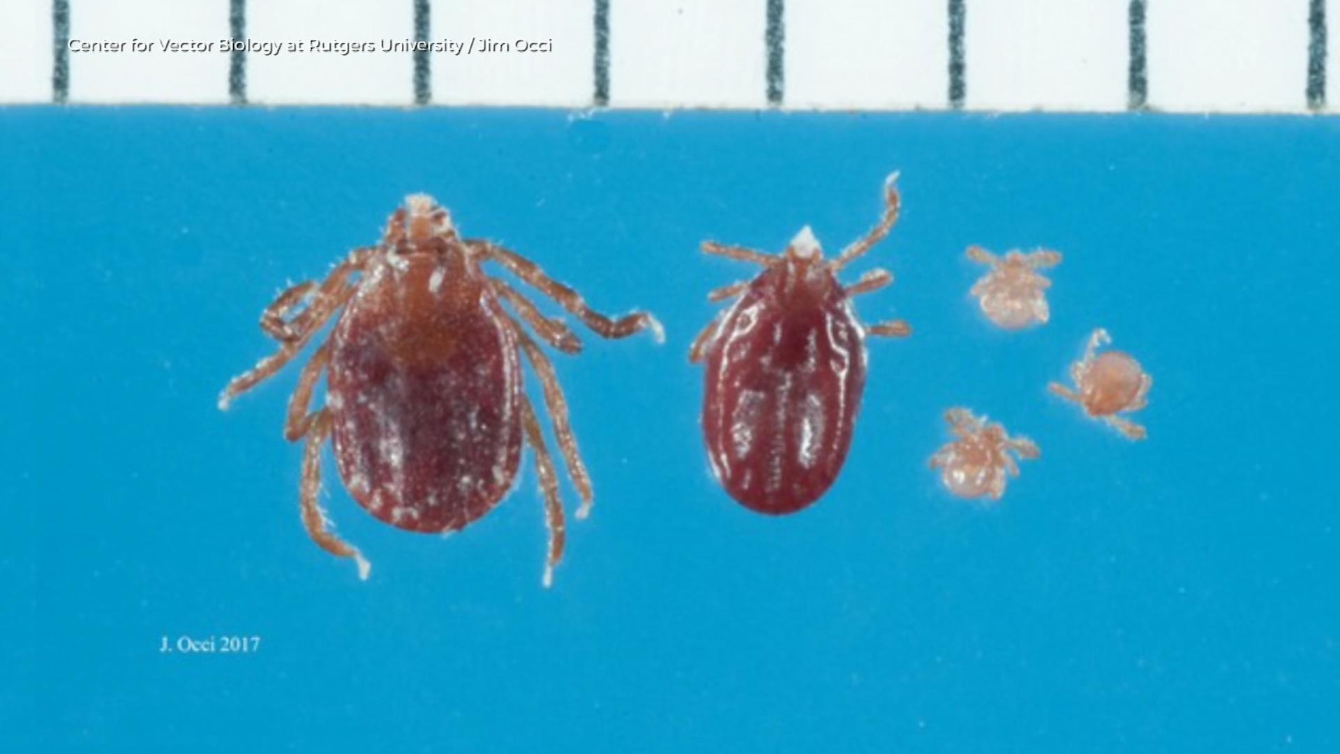 Uptick of Lyme Disease Video