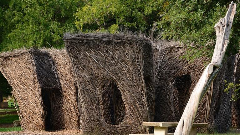 Central Texas Gardener: Native Trees (Including Smaller Gardens)