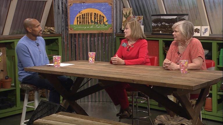 The Family Plot: Pressing Flowers & Lasagna Gardening