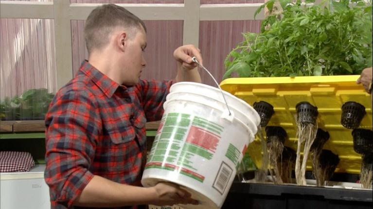 The Family Plot: Planting Bulbs & Hydroponic Maintenance