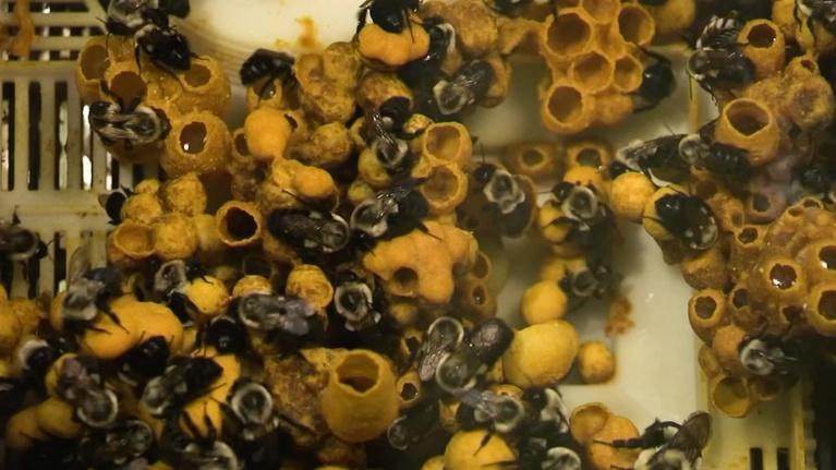 WCNY SciTech Now: Bee Barf, Cactus, Gravity & Classroom Coding