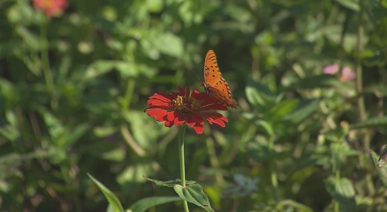 Volunteer Gardener: Volunteer Gardener 2814