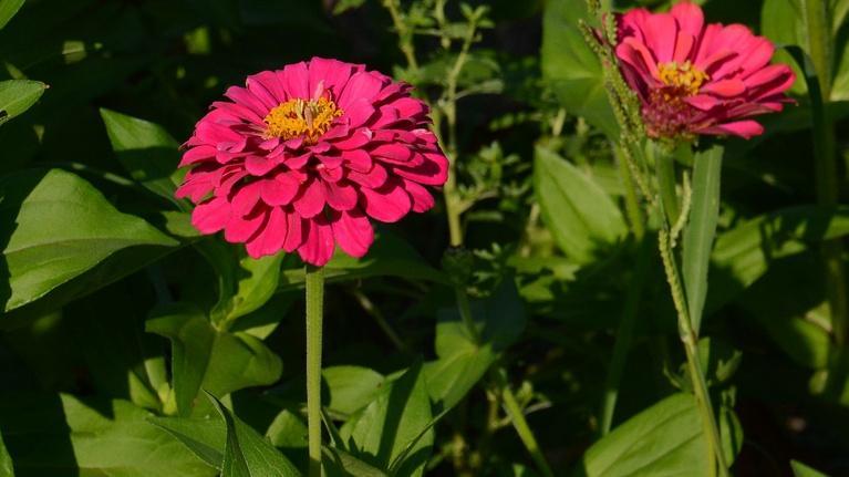 Central Texas Gardener: Sedges, Sages & Sedums for Sun to Shade