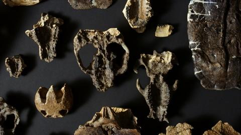 NOVA -- How Fossilized Plants Tell Us About the Evolution of Animals