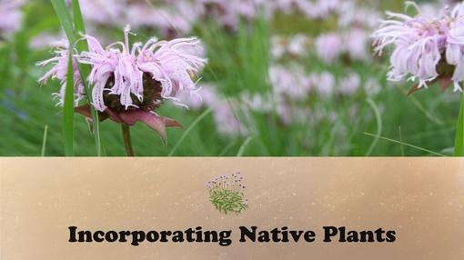 Let's Grow Stuff : Incorporating Native Plants